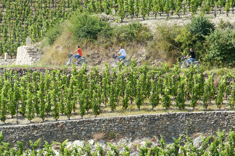 les vignobles en terrasse de la vallée du Rhône en vélo