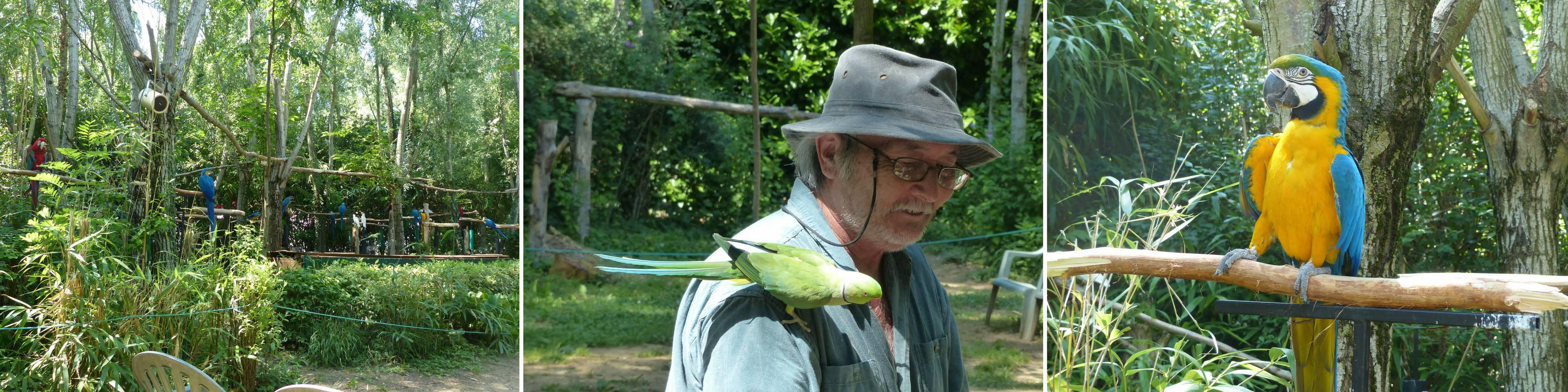 Parrots park in Bren