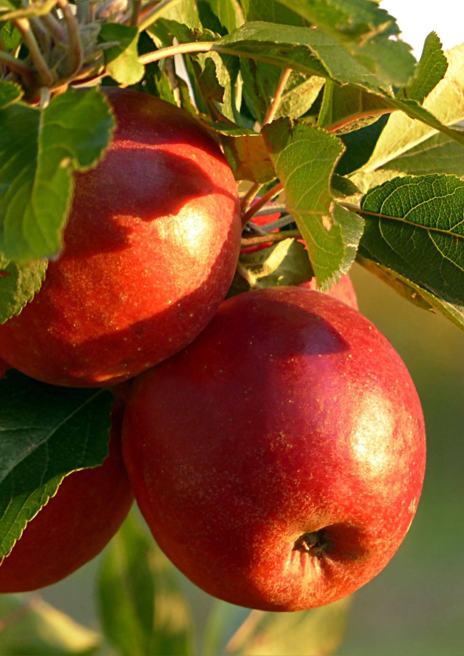 fruits de saison en Ardèche Hermitage