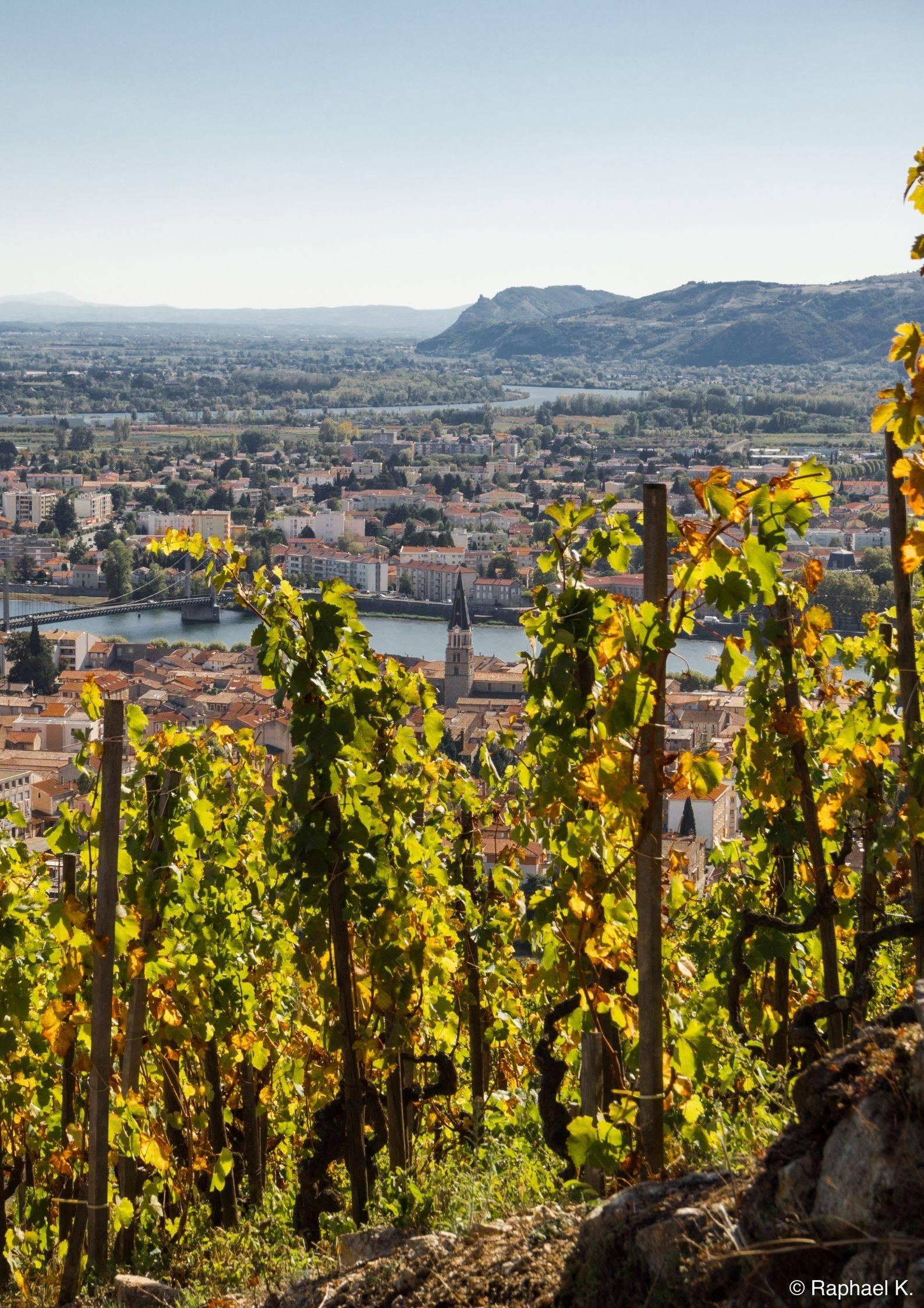 Vignobles avec vu sur le Rhône