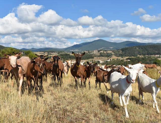 Rencontres des producteurs du pays de Saint Félicien en Ardèche.