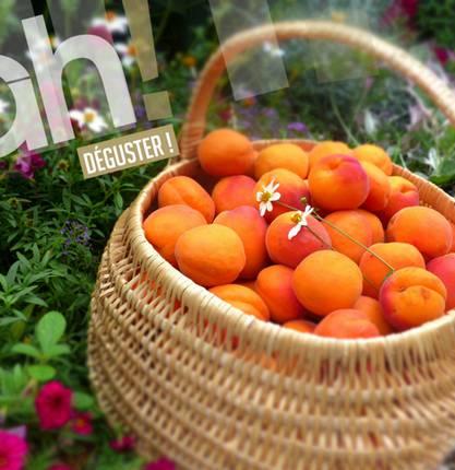 Acheter des fruits en Vallée du Rhône