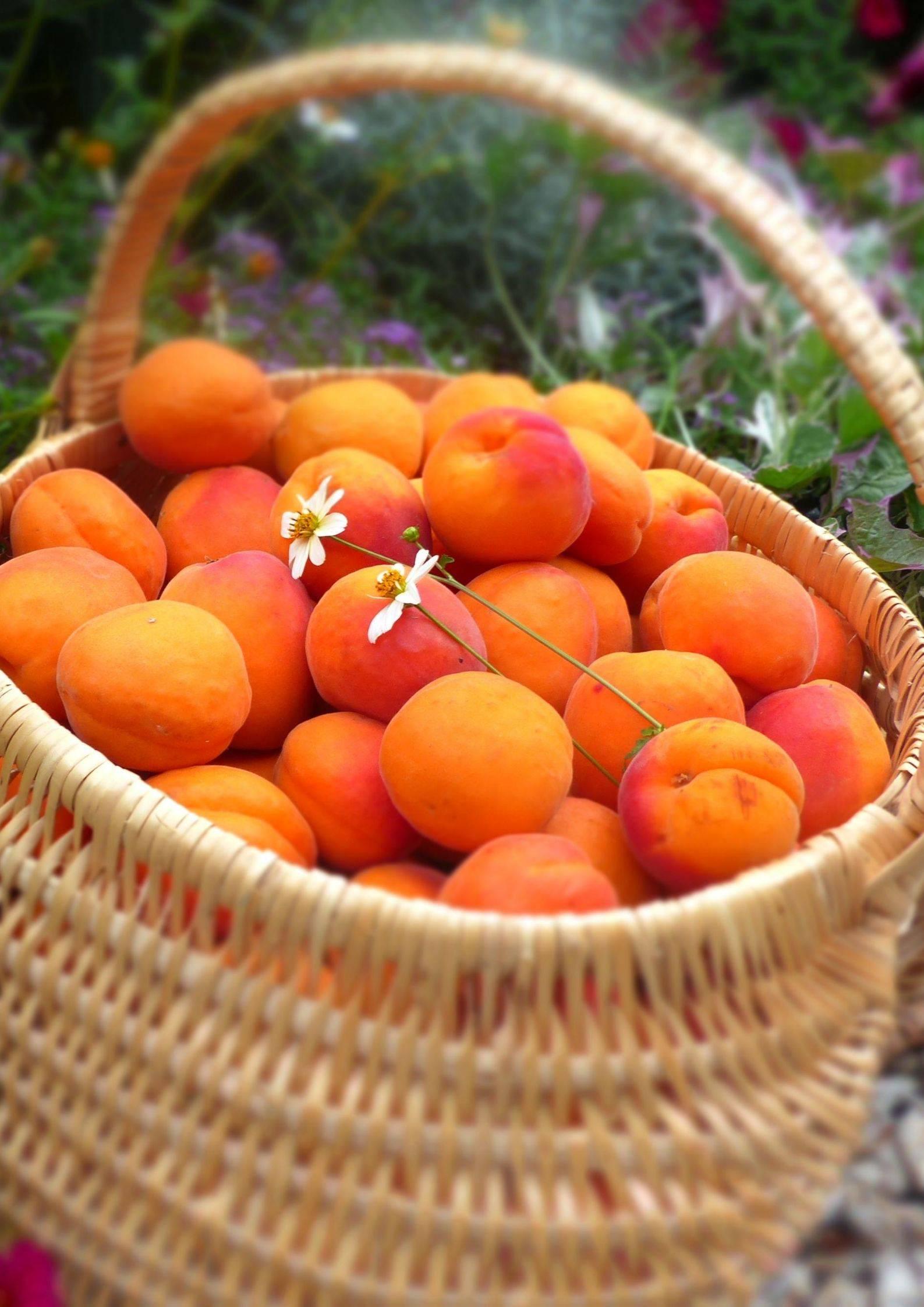 Abricot de la Drôme des Collines