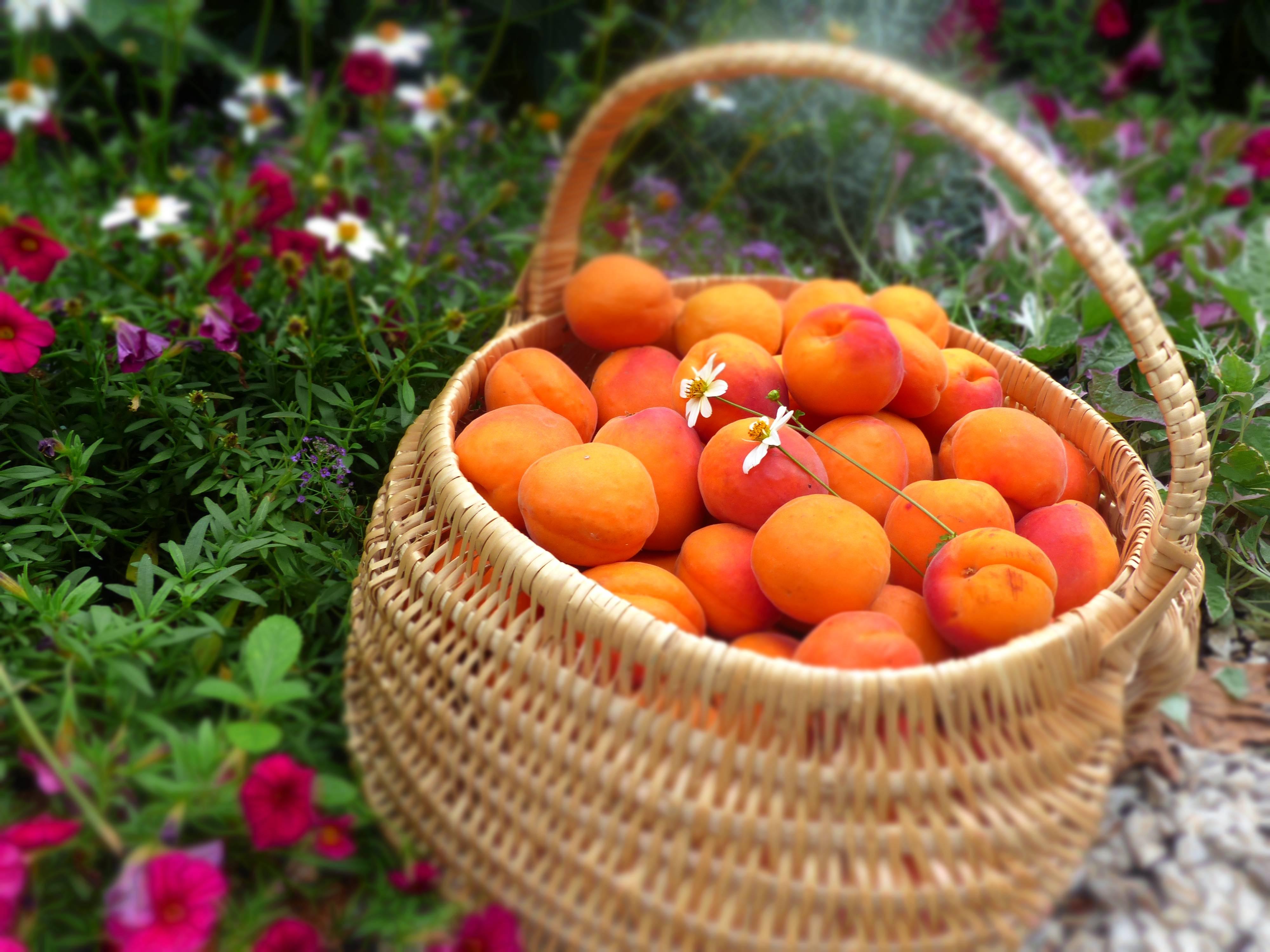Abricots de la vallée du Rhône