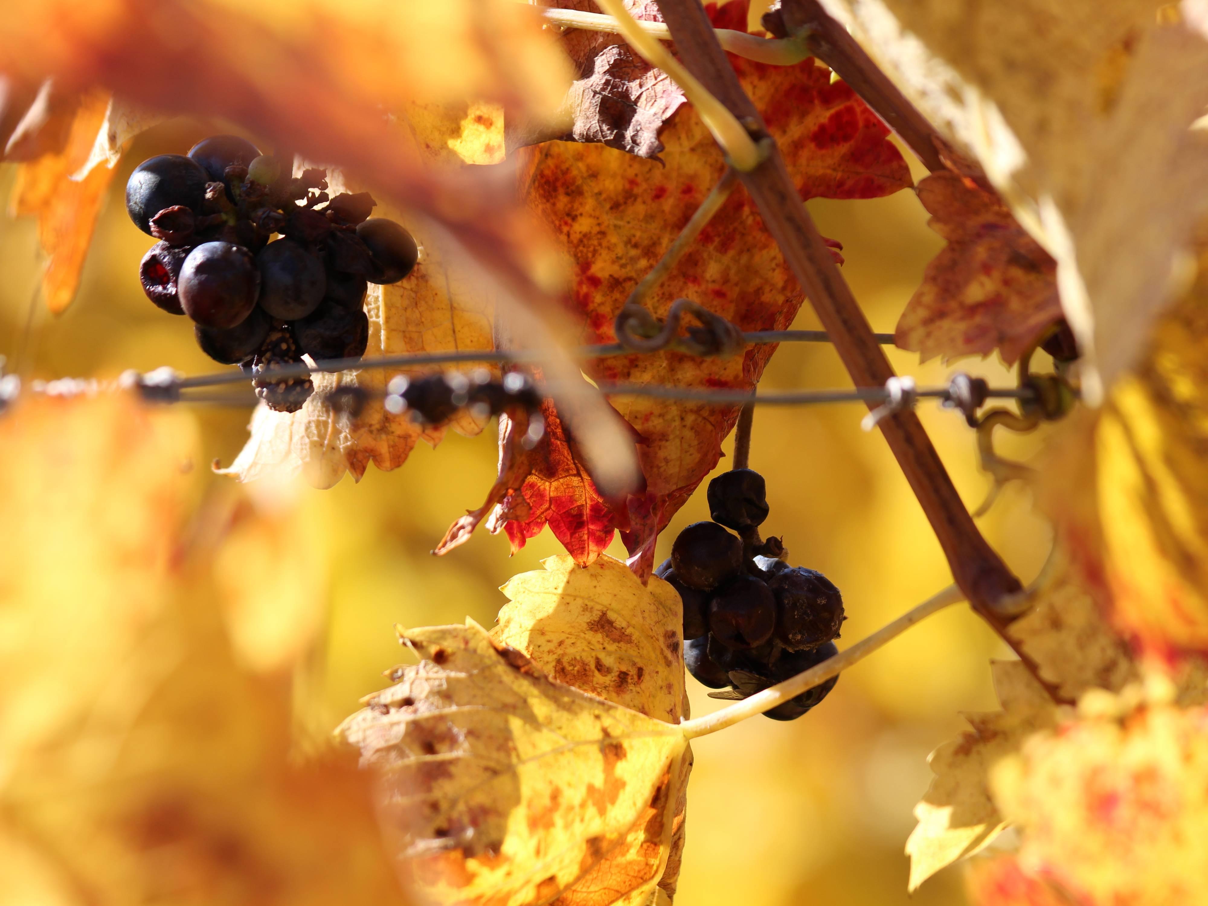 couleurs d'automne @ Sido (4).JPG