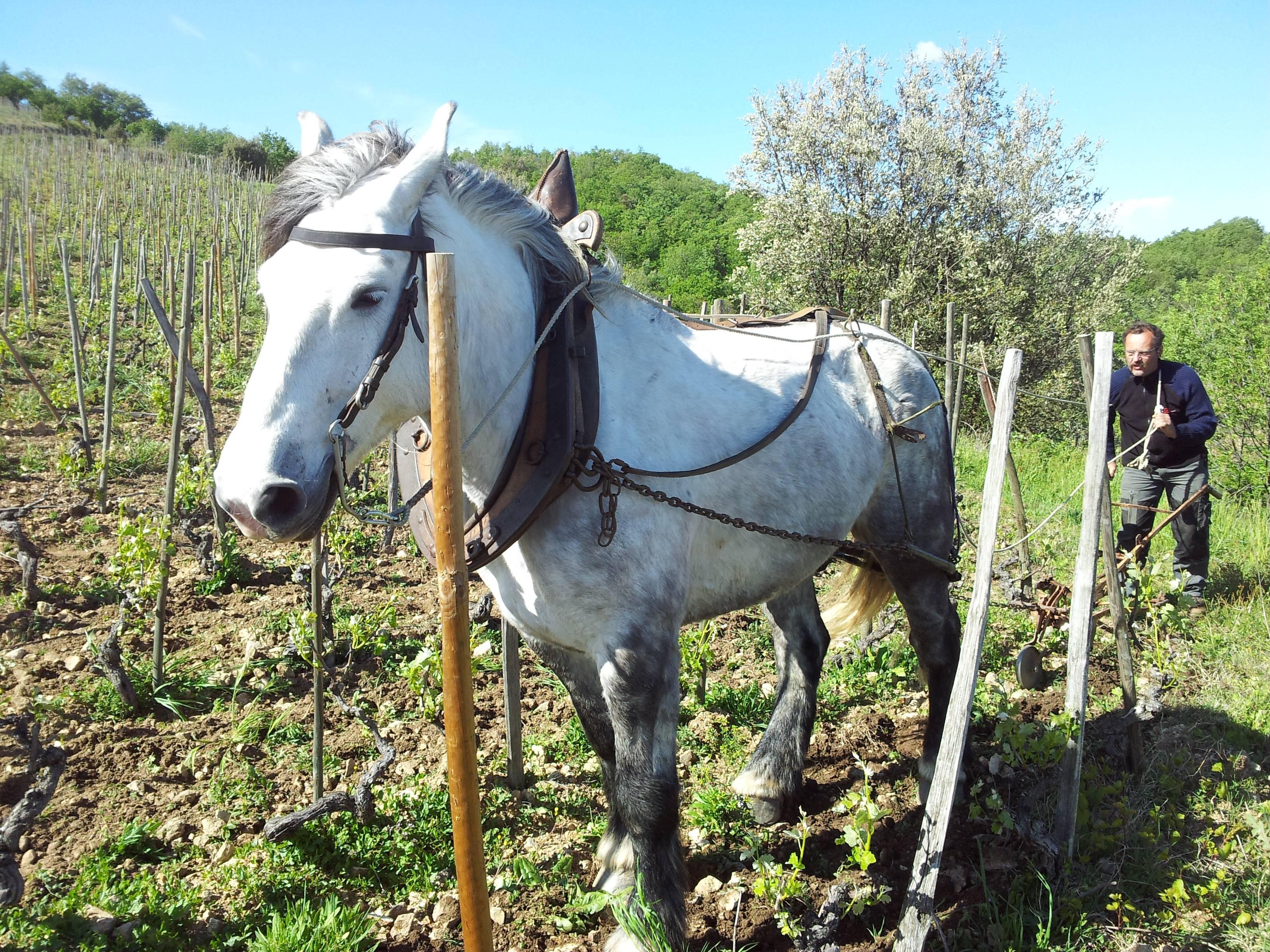 Domaine de Gouye - travaux dans les vignes