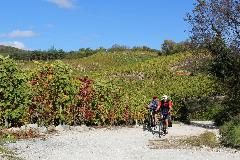 Balade en Vélo à assistance électrique dans les vignes
