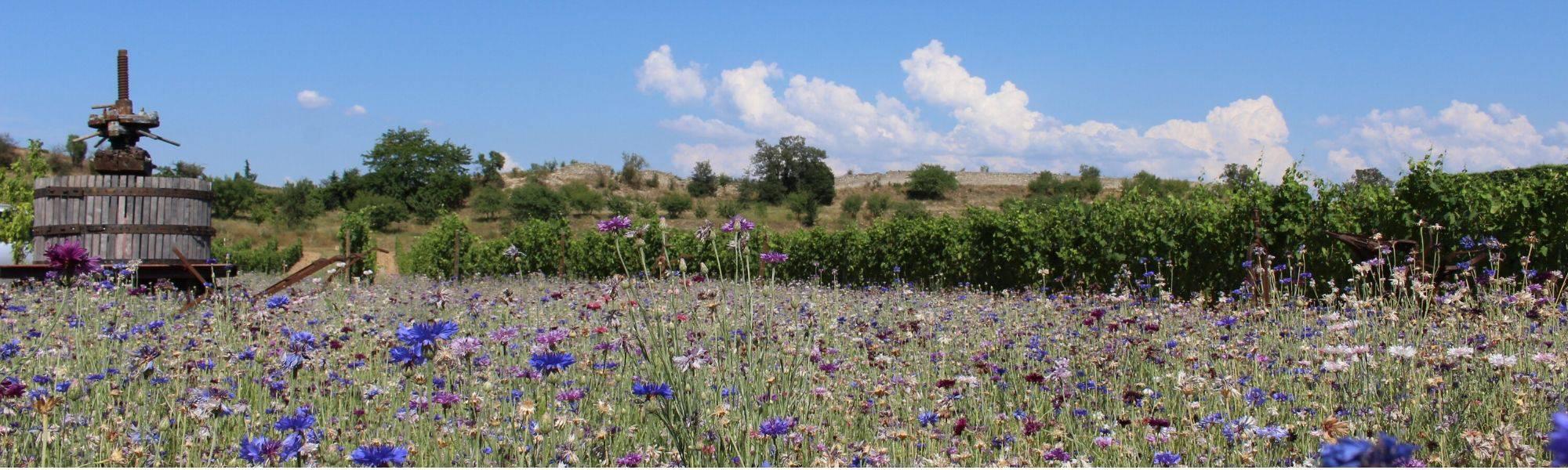 Zone de biodiversité Michelas St Jemms