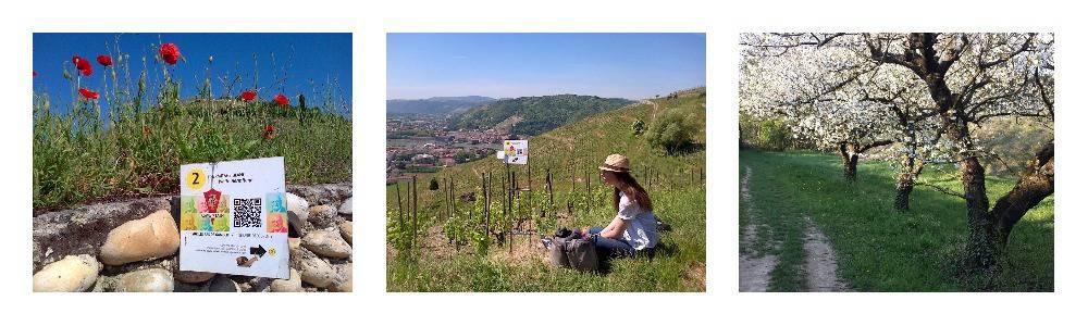 Les coteaux de l'hermitage randonnée sur les pas de Gambert Ardèche Hermitage Tourisme.jpg