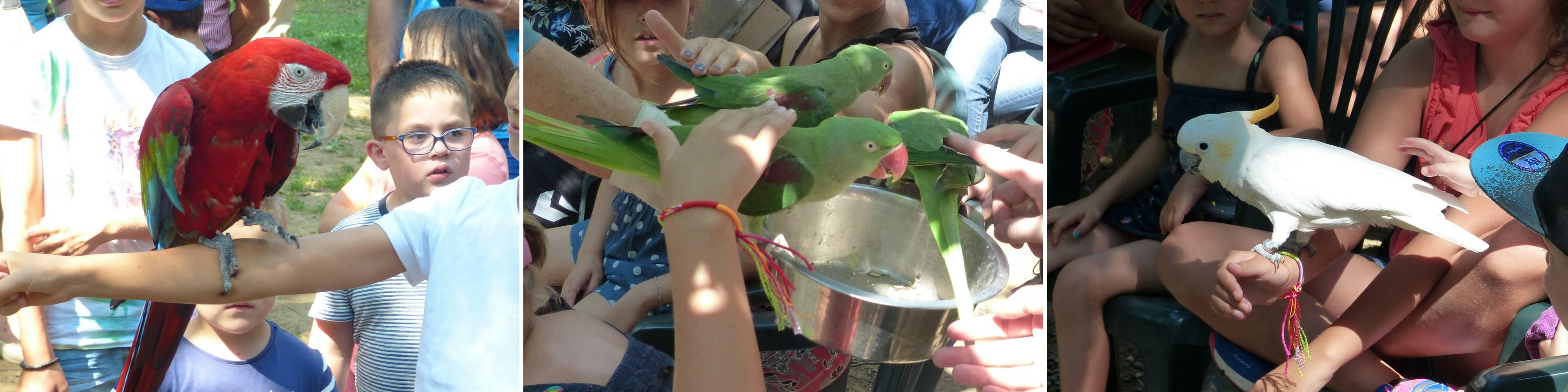 Entrance price parrots park