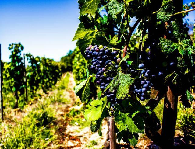 My wine road