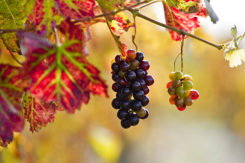 Le Fascinant week-end Vignobles & Découvertes 2020