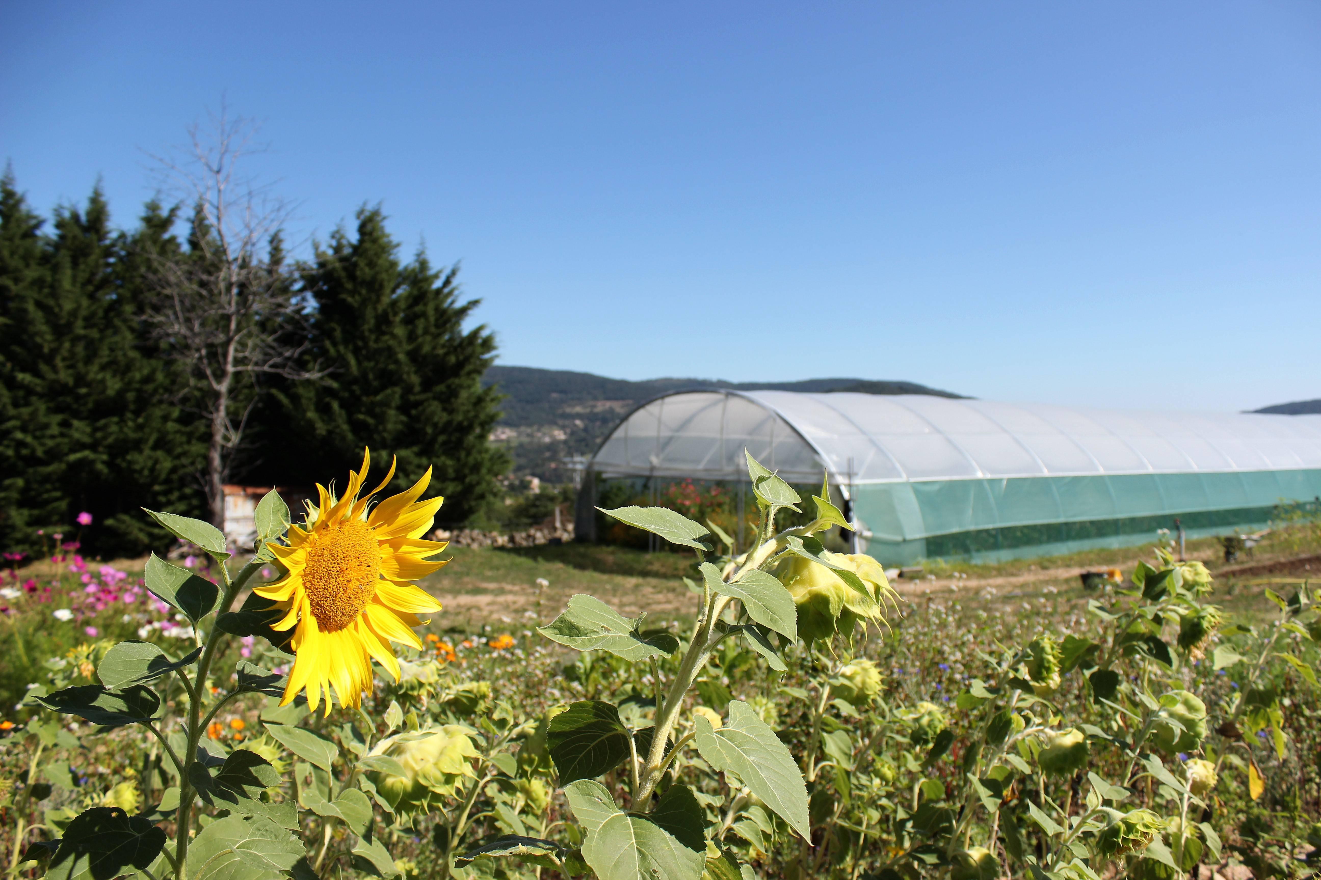 Producteurs de légumes bio