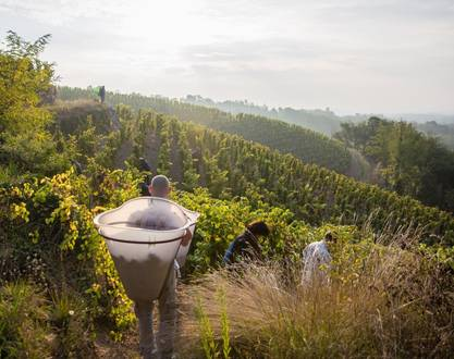 Harvest workshop, from grapes to wine - Estate Michelas St Jemms