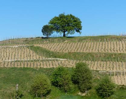 "Winery ""Côte Ste Epine"""