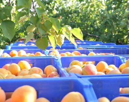 Comptoir de Pauline - Fruits et Légumes
