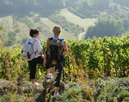 Fascinant Week-end' in Ardèche, from Hermitage to St Joseph, from Cornas to St Péray and in Southern Ardèche