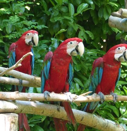 Papageienpark