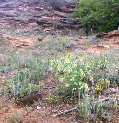 Hiking trail : En balade à Champos et au bois de Sizay