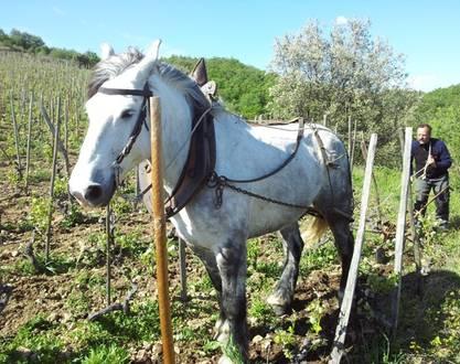 Winery of Gouye
