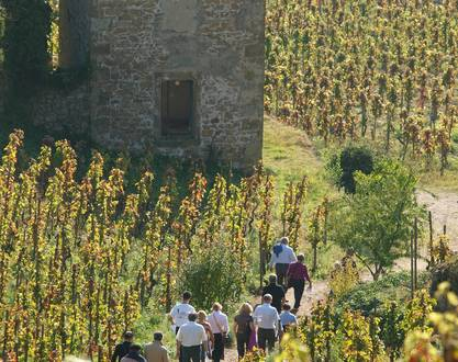Discover the vineyards of Maison M. CHAPOUTIER !  - Fascinant Week-End Vignobles & Découvertes
