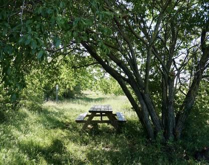 Biodiversité et Vignes au Domaine Michelas St Jemms