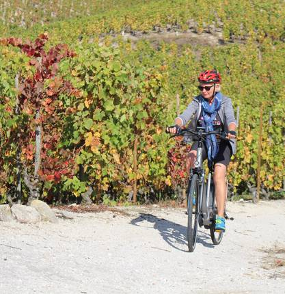 E.bike tour : Between vineyards and orchards