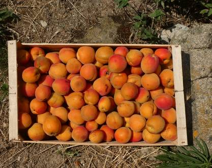 Les Frui'Thé